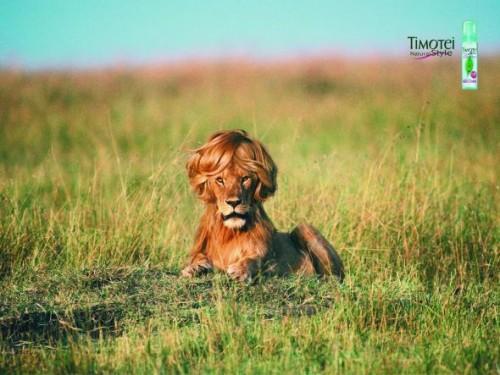 Timotei: Lion