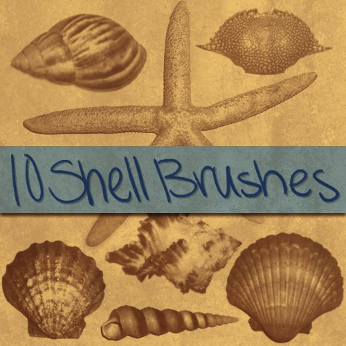 10 Different Shells Brushes Sets