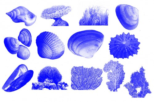13 Free Anemone, Shells, Coral Brushes