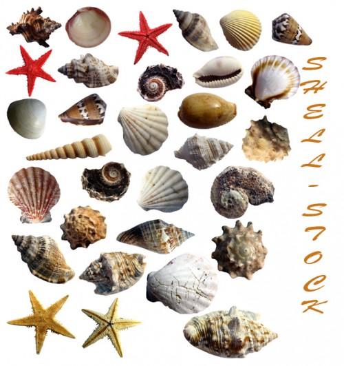 31 New Shells Photoshop Brushes