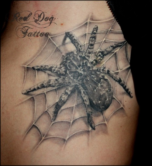 3D Spider Tattoo Healed