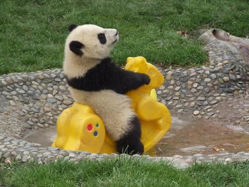 Play Panda