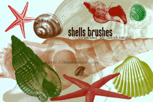 11 Shells Brushes for Free Download