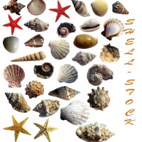 31 New Shells Photoshop Brushes