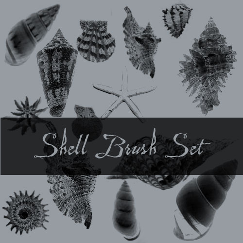 32 Cool Shell Brushes for Photoshop