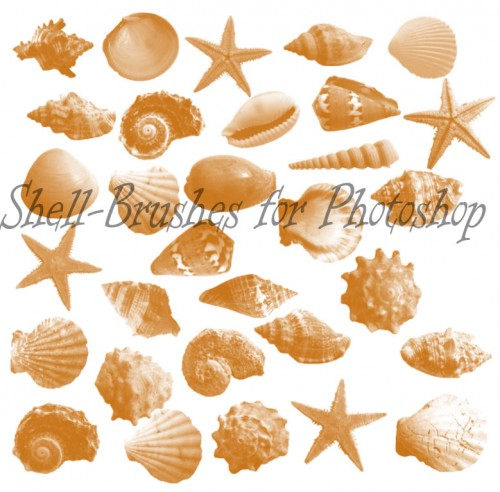 Best Free Shell Brushes for Photoshop